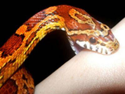 На Буковине 10-летнего мальчика укусила змея