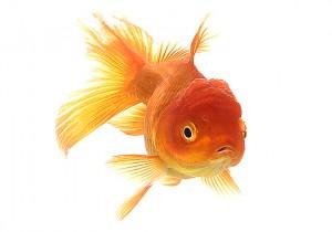 акваріумні рибки та дитина