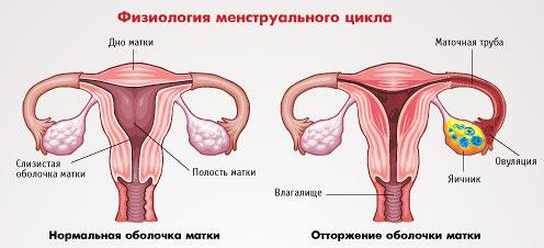 Фізіологія менструального циклу і аменорея