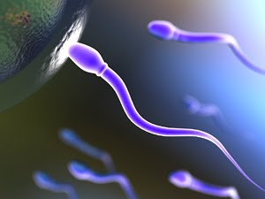 Що таке спермограма?