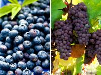 Чорниця з виноградом