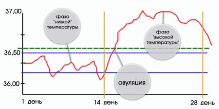 фаза овуляції