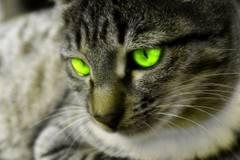Чи може присутність кота в будинку негативно вплинути на дитину?
