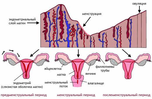 Що таке відхилення в менструальному циклі?