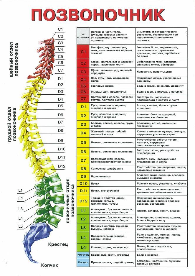 хребет і хвороби органів