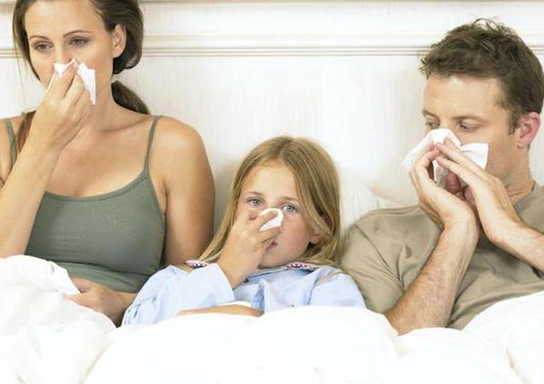 шипшина для лікування і профілактики застуди