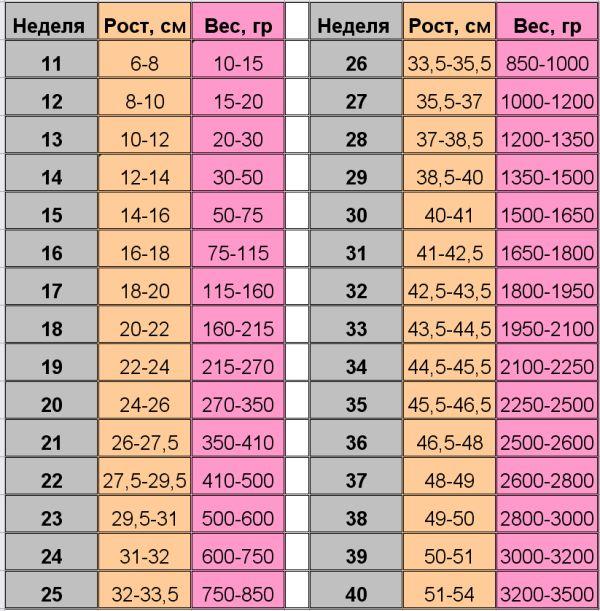 таблиця ваги плода по тижнях вагітності