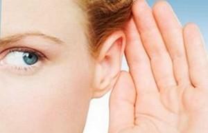 Закладає вуха в період вагітності